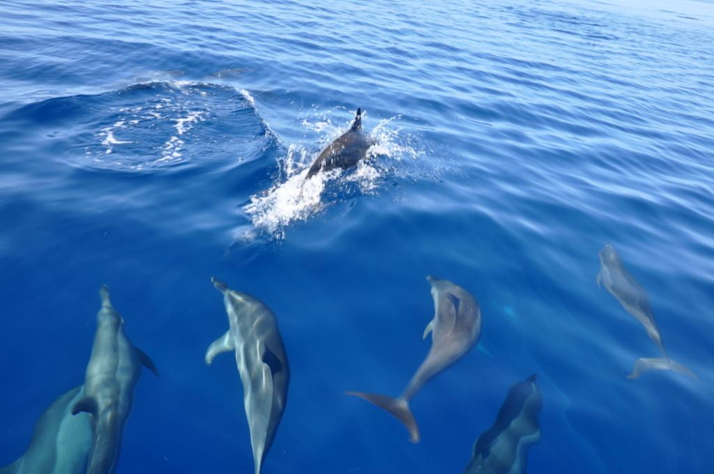 Malediven. Bring mich auf die Palme. Banyan Tree und Angsana. strand sonne malediven indischer ozean orient honeymoon 2  tui berlin Malediven Delfine