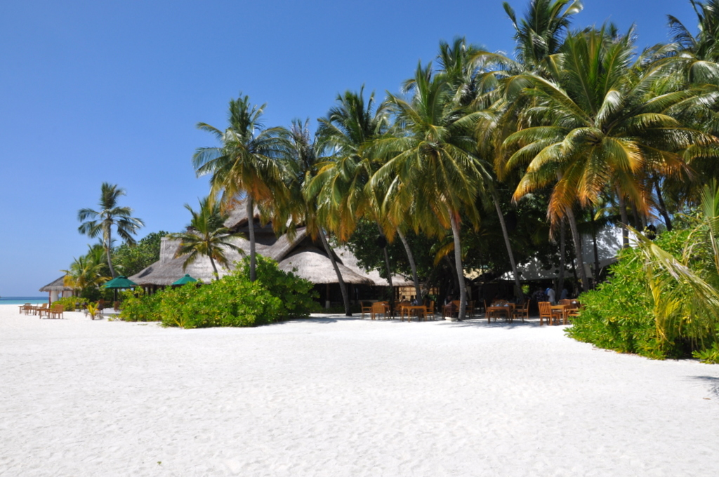 Malediven. Bring mich auf die Palme. Banyan Tree und Angsana. strand sonne malediven indischer ozean orient honeymoon 2  tui berlin Malediven Palmen Sandstrand