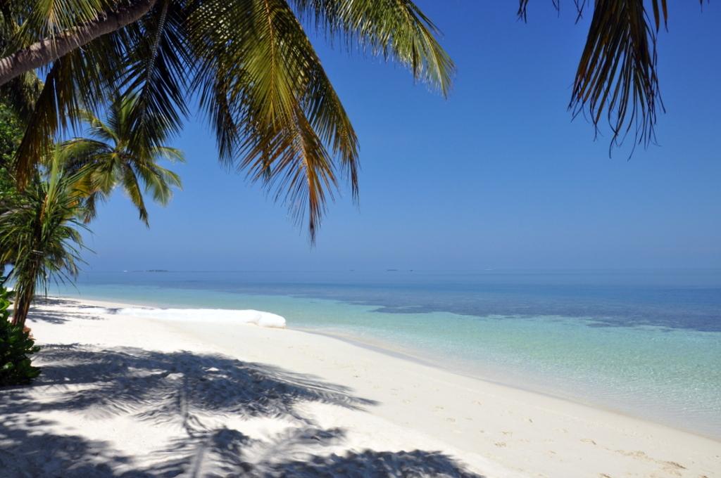 Malediven. Bring mich auf die Palme. Banyan Tree und Angsana. strand sonne malediven indischer ozean orient honeymoon 2  tui berlin Malediven Strand Palme