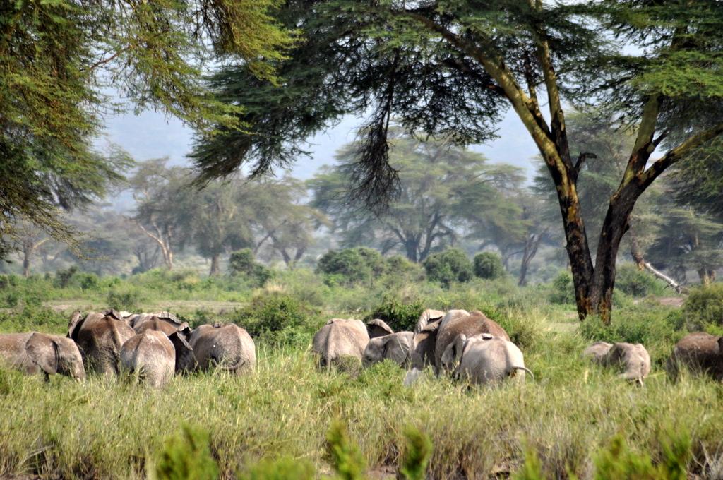 Hunderttausend Gnus und wir. Begegnungen in Tansania. tansania safari afrika  tui berlin Tansania Amboseli Elefanten