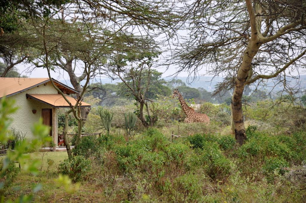Hunderttausend Gnus und wir. Begegnungen in Tansania. tansania safari afrika  tui berlin Tansania Hatari Lodge