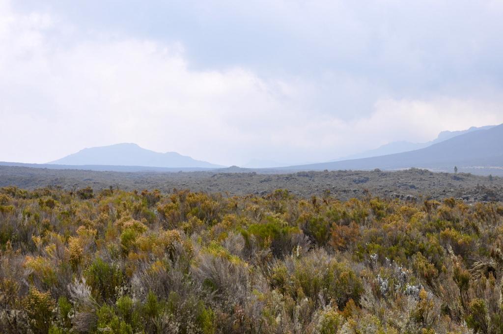 Hunderttausend Gnus und wir. Begegnungen in Tansania. tansania safari afrika  tui berlin Tansania Kilimanscharo Wanderung