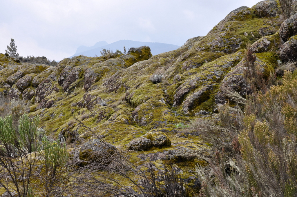 Hunderttausend Gnus und wir. Begegnungen in Tansania. tansania safari afrika  tui berlin Tansania Kilimanscharo Wanderung Shira Plateau