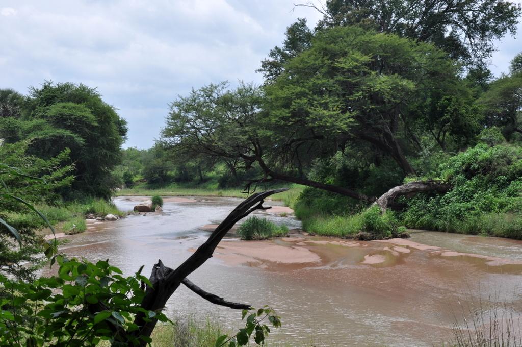Hunderttausend Gnus und wir. Begegnungen in Tansania. tansania safari afrika  tui berlin Tansania Ruaha Jongomero Camp