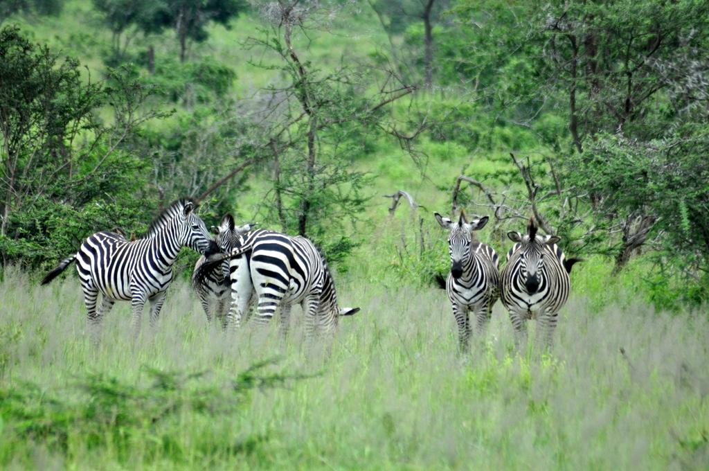 Hunderttausend Gnus und wir. Begegnungen in Tansania. tansania safari afrika  tui berlin Tansania Ruaha Nationalpark