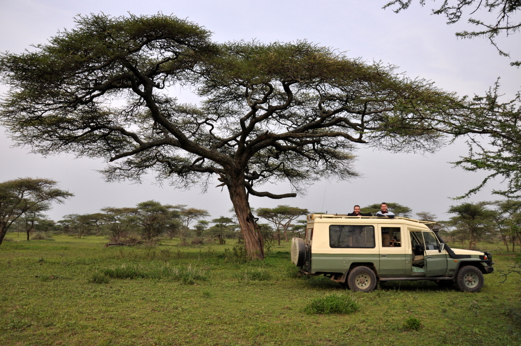 Hunderttausend Gnus und wir. Begegnungen in Tansania. tansania safari afrika  tui berlin Tansania Serengeti Akazie