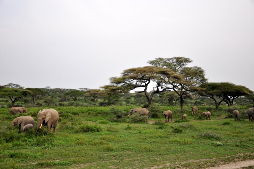 Hunderttausend Gnus und wir. Begegnungen in Tansania. tansania safari afrika  tui berlin Tansania Serengeti Elefanten