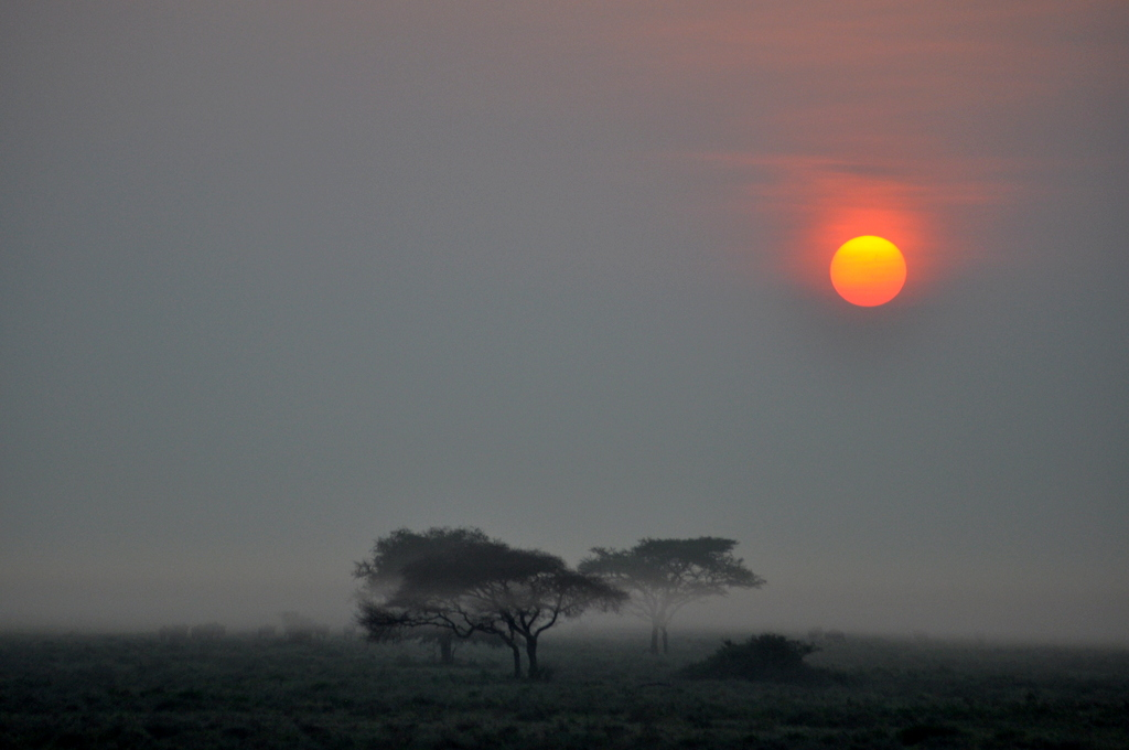 Hunderttausend Gnus und wir. Begegnungen in Tansania. tansania safari afrika  tui berlin Tansania Serengeti Sonnenaufgang