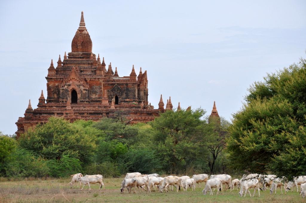 Myanmar. Von goldenen Pagoden und Einbein Fischern. sonne land und leute myanmar asien  tui berlin Myanmar Bagan 1