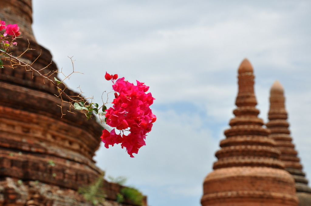 Myanmar. Von goldenen Pagoden und Einbein Fischern. sonne land und leute myanmar asien  tui berlin Myanmar Tempel Blume 1