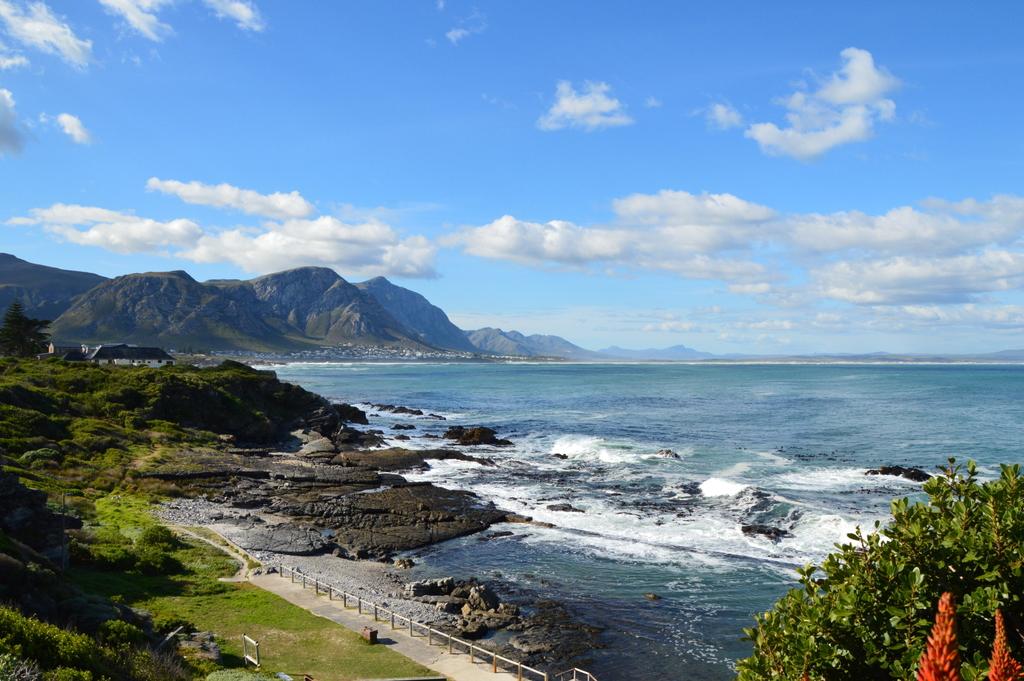 Südafrika im Juni: Pinguine, Wale und eine Blumensafari suedafrika sonne land und leute reisebericht afrika  tui berlin suedafrika hermanus bucht 1