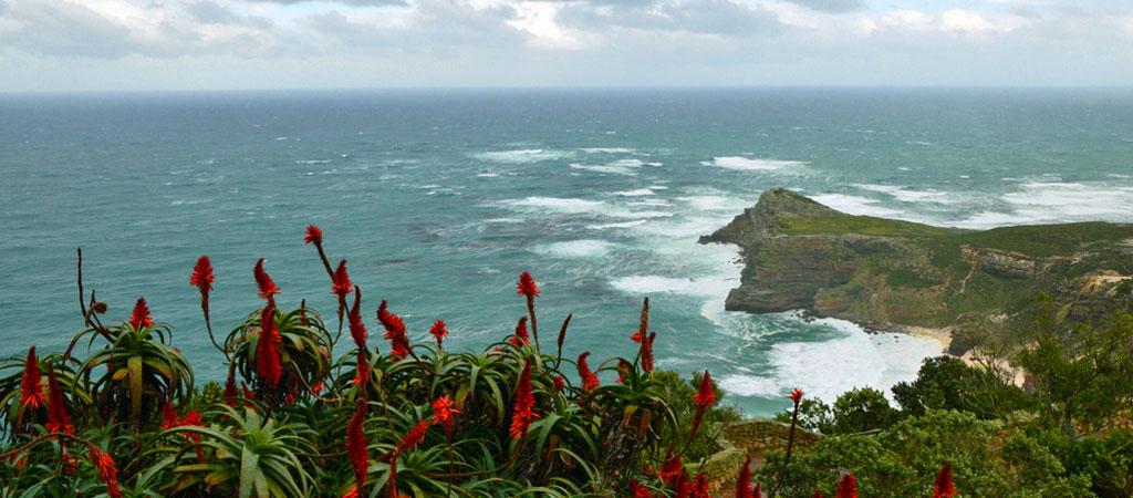 Südafrika im Juni: Pinguine, Wale und eine Blumensafari suedafrika sonne land und leute reisebericht afrika  tui berlin suedafrika kap meer ausblick header