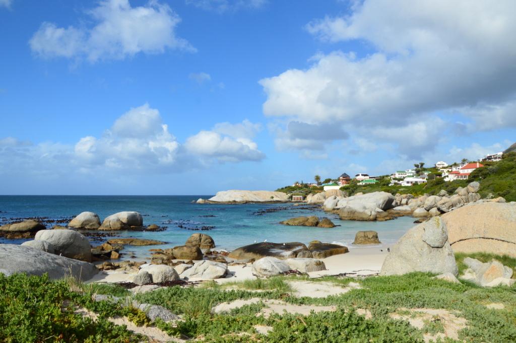 Südafrika im Juni: Pinguine, Wale und eine Blumensafari suedafrika sonne land und leute reisebericht afrika  tui berlin suedafrika simons town 1