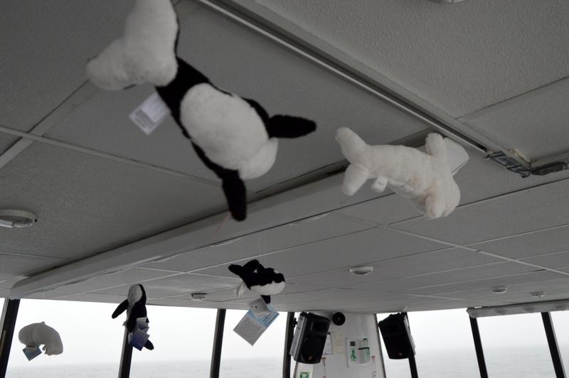 Auf Weltreise im Privatjet: Teil 2   Quebec und Tadoussac staedtereisen kanada karibik mittelamerika  tui berlin weltreise quebec whale watching st lorenzstrom