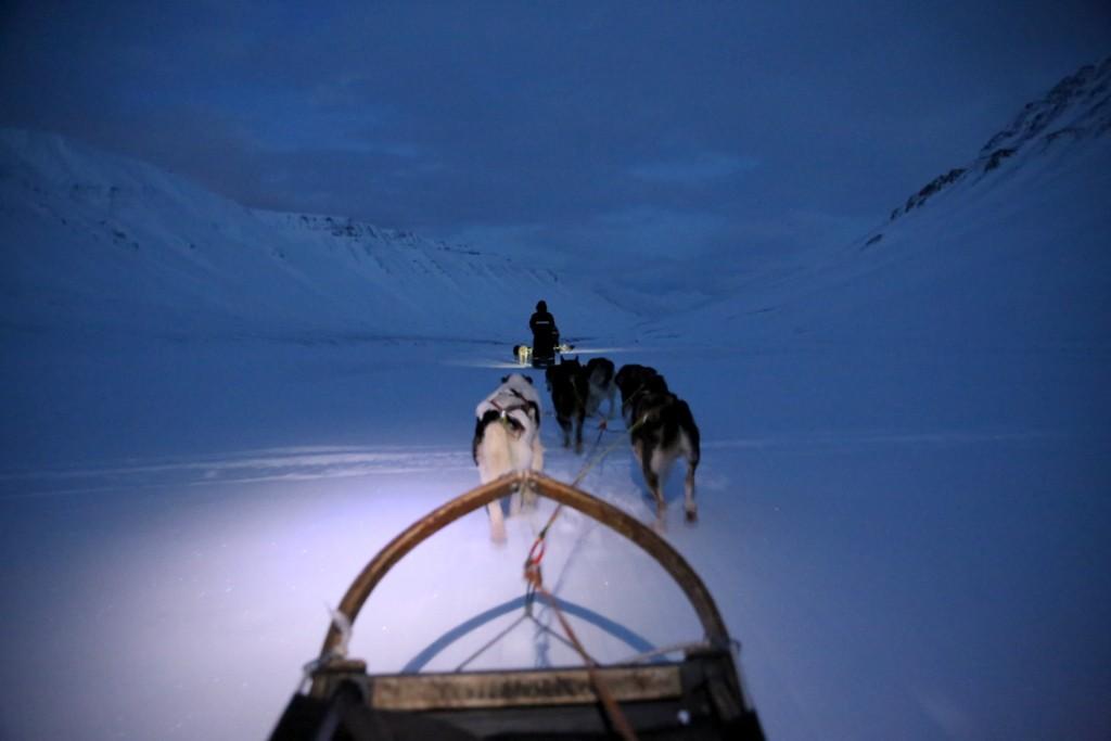Svalbard, Polarkreis, Schlittenhunde, Husky, Wal, Rentier, Robbe, Longyearbyen, Schneegestöber, Nordpol, Reiseblog, persönlicher Reiseblog, Erfahrungsbericht, Reiseerlebnisbericht