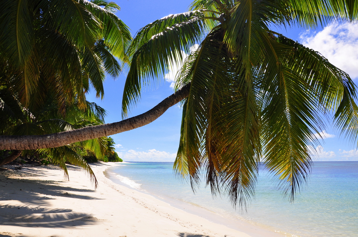 Traumtage auf den Seychellen: Desroches Island strand sonne seychellen indischer ozean orient honeymoon 2  tui berlin Seychellen Desroches Strand