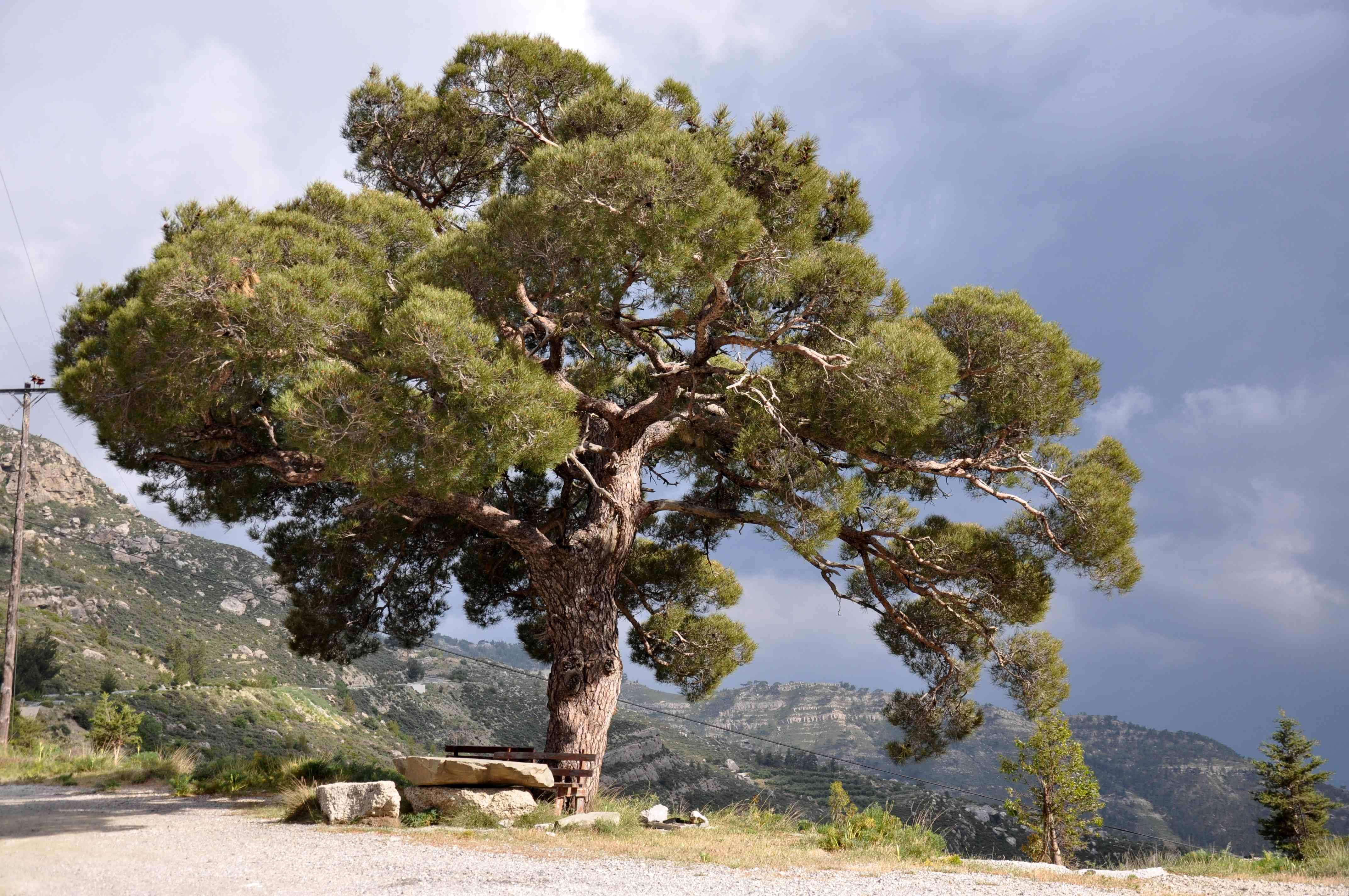 Offroad auf Kreta unterwegs   Land Rover Adventure Tour Greece 2015 sonne land und leute griechenland europa  tui berlin kreta berg dikti