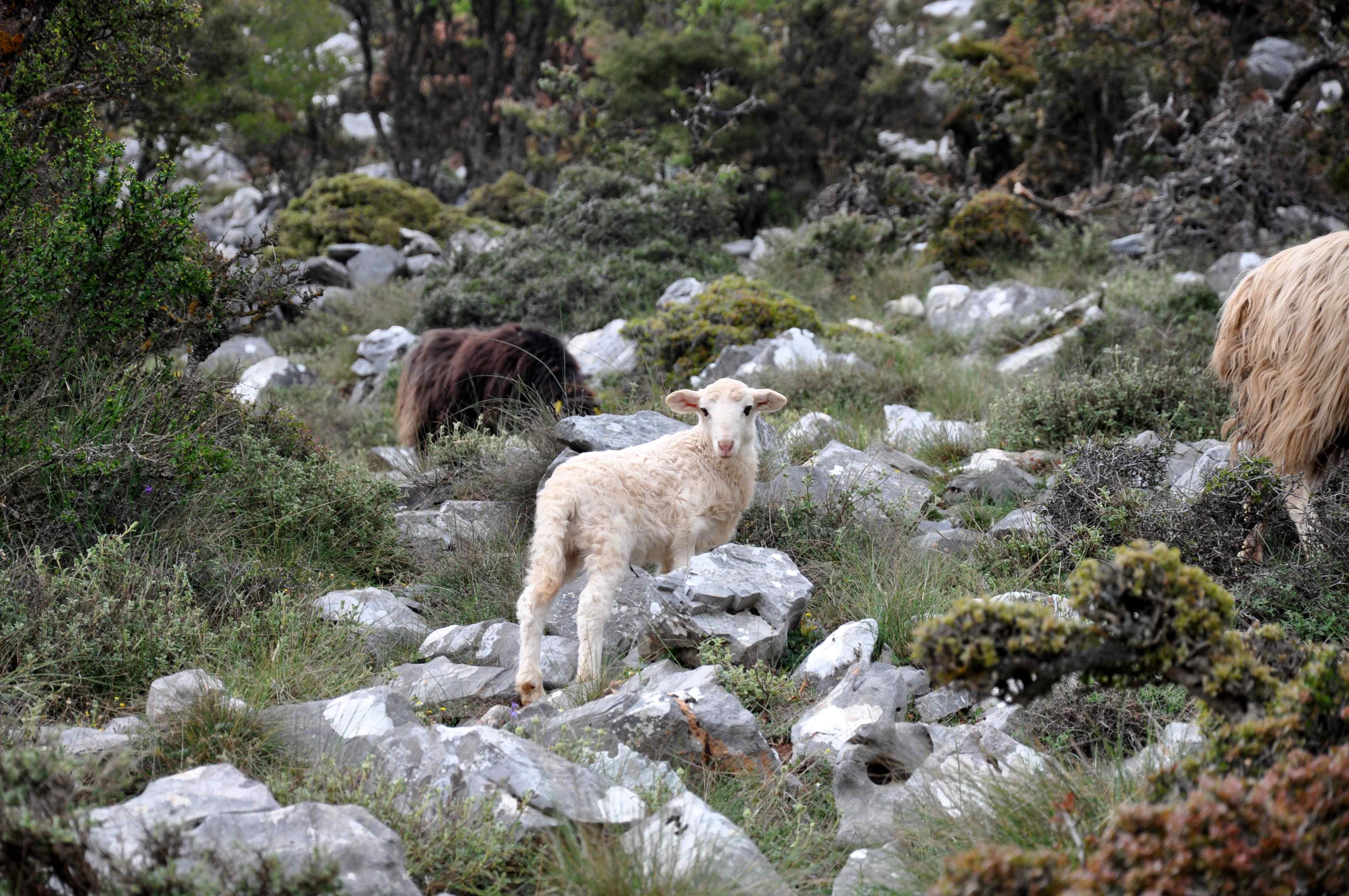 Offroad auf Kreta unterwegs   Land Rover Adventure Tour Greece 2015 sonne land und leute griechenland europa  tui berlin kreta berge schafe
