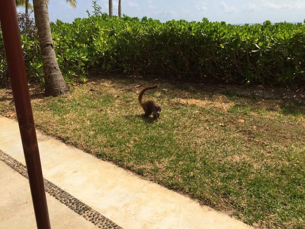 Kleine Mexiko Rundreise   Teil 3: Yucatan Halbinsel strand sonne mexiko laender karibik mittelamerika  tui berlin mexiko yucatan cozumel waschbaer