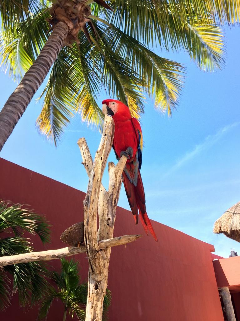 Kleine Mexiko Rundreise   Teil 3: Yucatan Halbinsel strand sonne mexiko laender karibik mittelamerika  tui berlin mexiko yucatan papagei