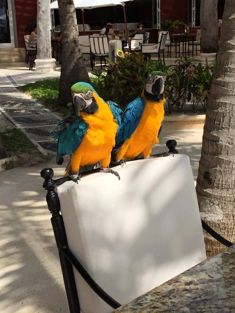Kleine Mexiko Rundreise   Teil 3: Yucatan Halbinsel strand sonne mexiko laender karibik mittelamerika  tui berlin mexiko yucatan papageien1
