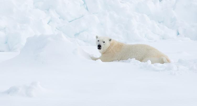 tui-berlin-header-spitzbergen