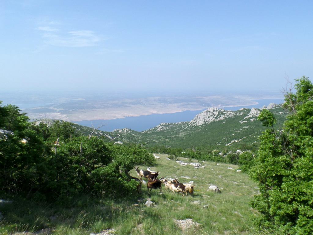Kurzreise Kroatien   Frühstück an der Adria. staedtereisen kroatien europa  tui berlin norddalmatien ausblick