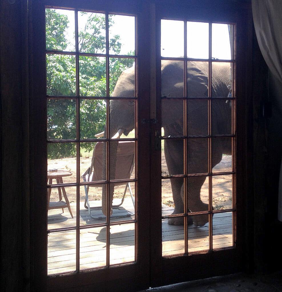 Simbabwe und Victoria Falls mit Wilderness Safaris sonne simbabwe safari land und leute afrika  tui berlin Elefant Ruckomechi Camp
