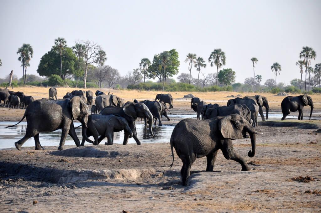 Simbabwe und Victoria Falls mit Wilderness Safaris sonne simbabwe safari land und leute afrika  tui berlin Hwange Nationalpark Wasserloch Elefanten