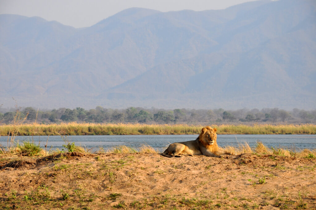 Simbabwe und Victoria Falls mit Wilderness Safaris sonne simbabwe safari land und leute afrika  tui berlin Manna Pool Nationalpark Loewe