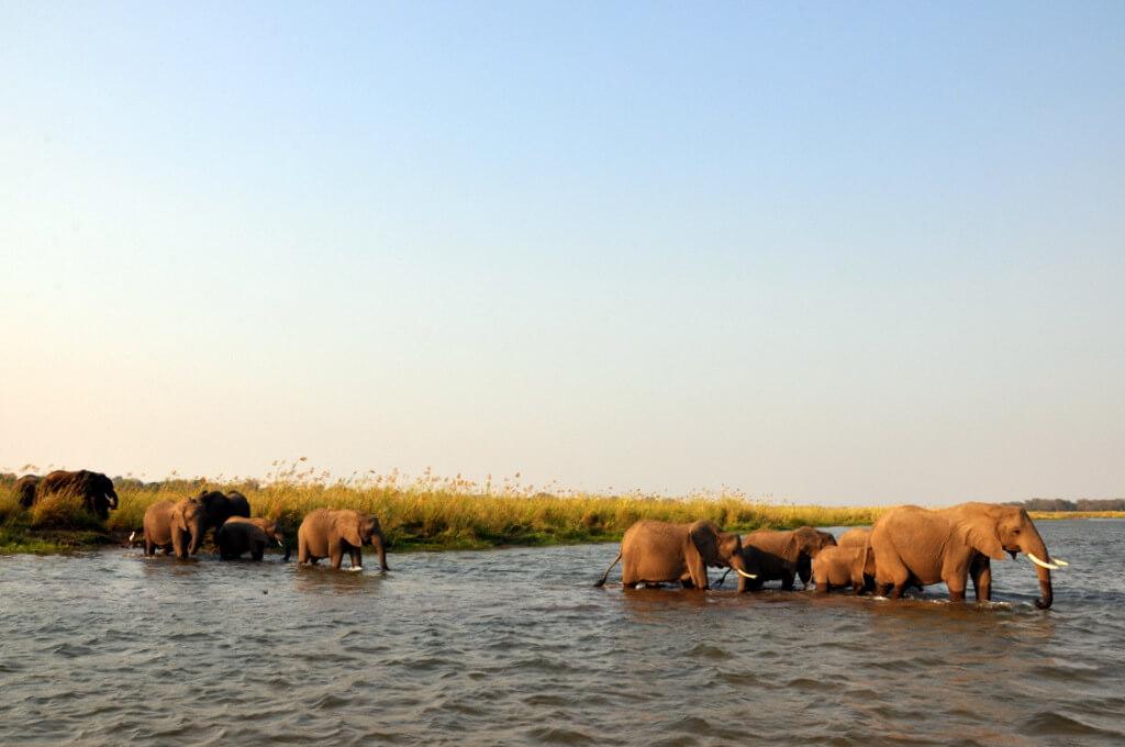 Simbabwe und Victoria Falls mit Wilderness Safaris sonne simbabwe safari land und leute afrika  tui berlin Ruckomechi Camp Elefanten Crossing Sambesi