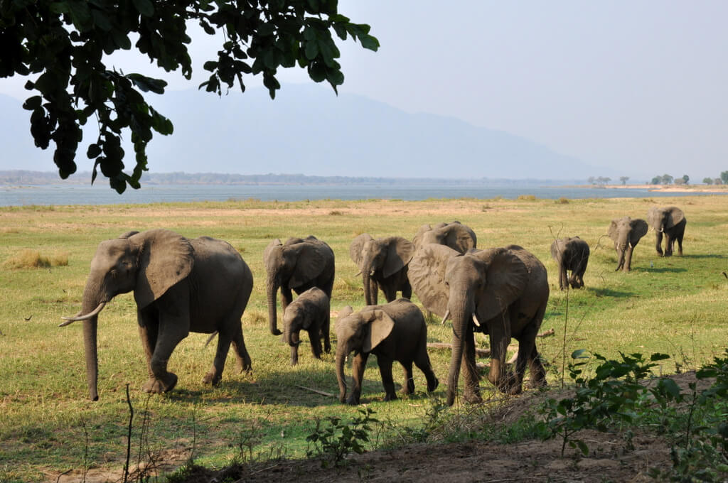 Simbabwe und Victoria Falls mit Wilderness Safaris sonne simbabwe safari land und leute afrika  tui berlin Ruckomechi Camp Elefanten Sambesi