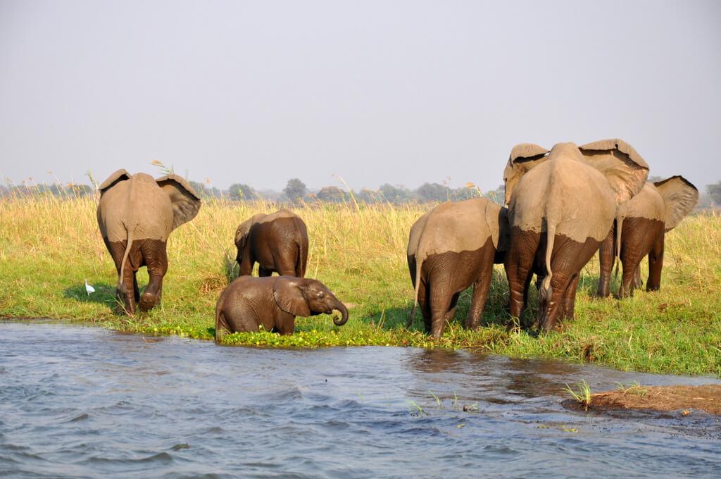 Simbabwe und Victoria Falls mit Wilderness Safaris sonne simbabwe safari land und leute afrika  tui berlin Sambesi Elefanten Crossing Ruckomechi Camp