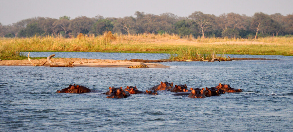 Simbabwe und Victoria Falls mit Wilderness Safaris sonne simbabwe safari land und leute afrika  tui berlin Sambesi Hippos