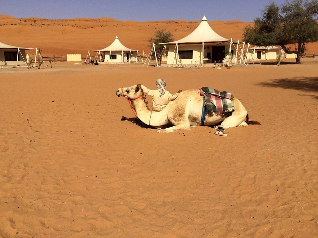Meine Reise nach Dubai und in den Oman. staedtereisen sonne orient oman dubai  tui berlin Oman Desert Camp Camel