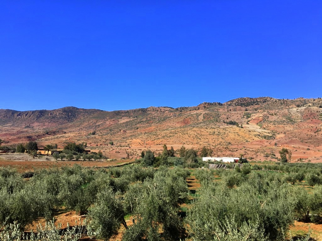 Marokkos Königsstädte   Eine Gebeco Erlebnisrundreise staedtereisen sonne land und leute marokko afrika  tui berlin marokko mittlerer atlas panorama