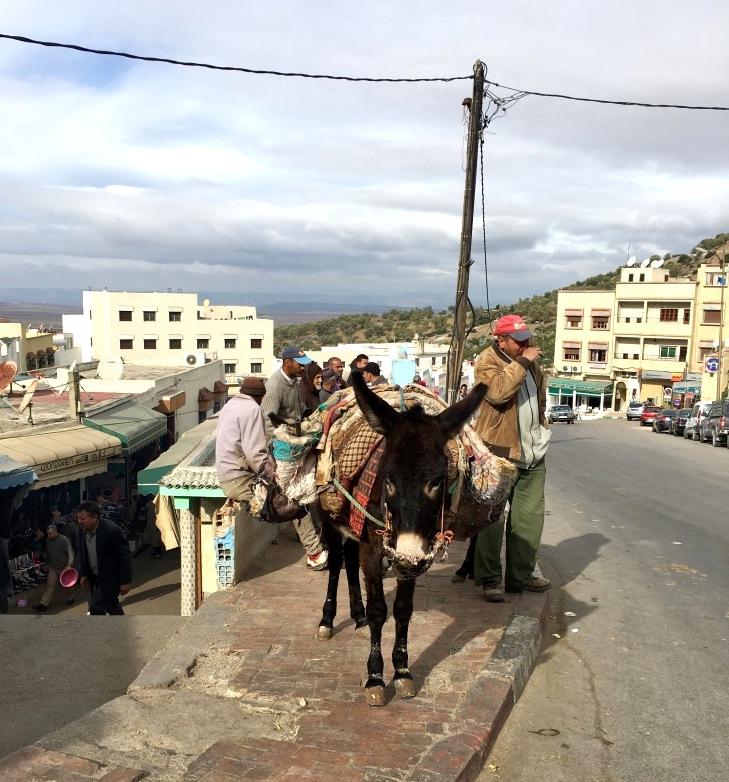 Marokkos Königsstädte   Eine Gebeco Erlebnisrundreise staedtereisen sonne land und leute marokko afrika  tui berlin marokko moulay idriss eseltaxi 1