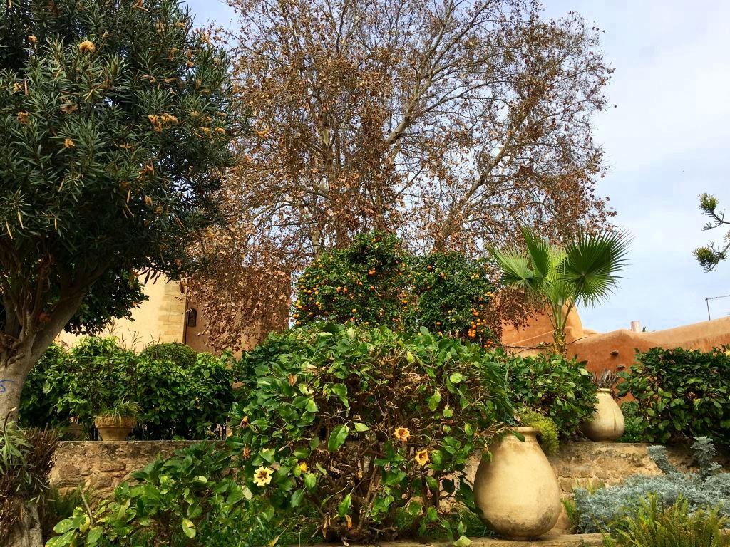 Marokkos Königsstädte   Eine Gebeco Erlebnisrundreise staedtereisen sonne land und leute marokko afrika  tui berlin marokko oudaia kasbah garten orangenbaum