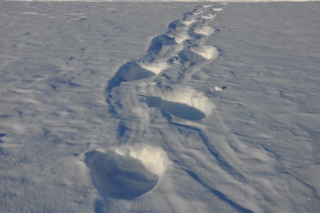 Svalbard   Mein Abenteuer mit Sonnenschein und blauem Himmel! winterurlaub schnee land und leute norwegen europa  tui berlin spitzbergen eisbaeren spuren im schnee