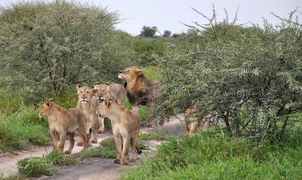 Botswana Safari und Victoriafälle: Unsere Afrika Rundreise sonne land und leute reisebericht botswana afrika  DSC 9709