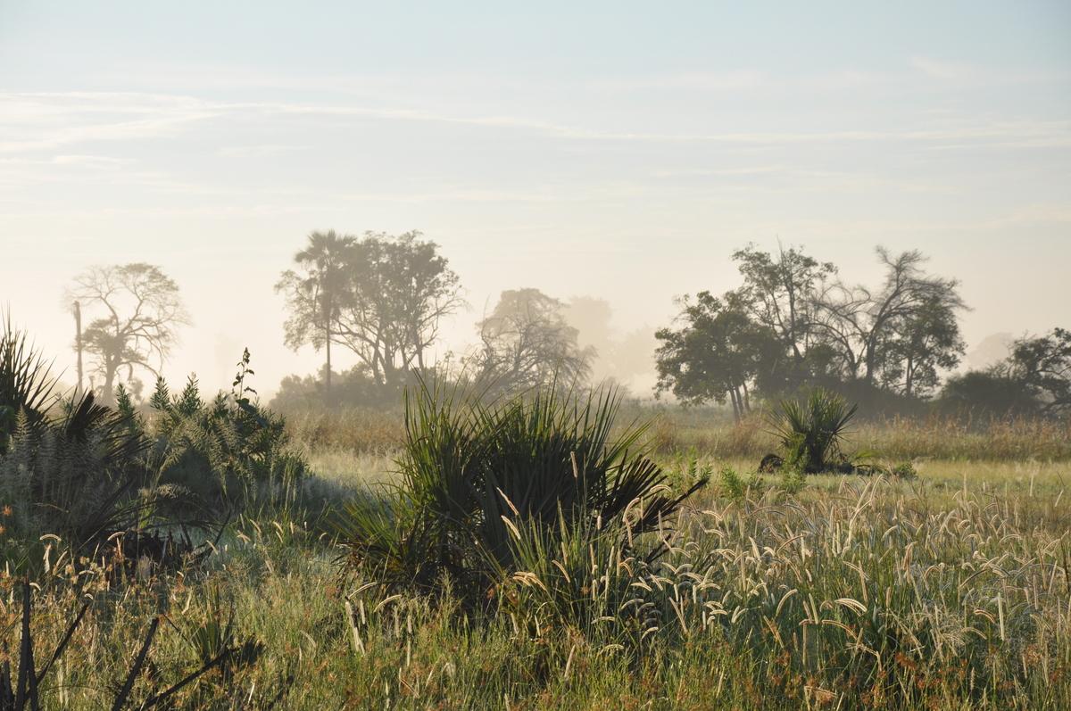 Botswana Safari und Victoriafälle: Unsere Afrika Rundreise sonne land und leute reisebericht botswana afrika  TUI Berlin Botswana Safari Gruppenreise Okavangodelta