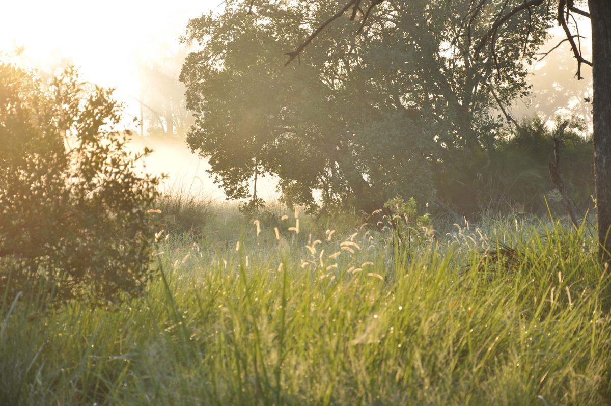 Botswana Safari und Victoriafälle: Unsere Afrika Rundreise sonne land und leute reisebericht botswana afrika  TUI Berlin Botswana Safari Xigera Camp am Morgen