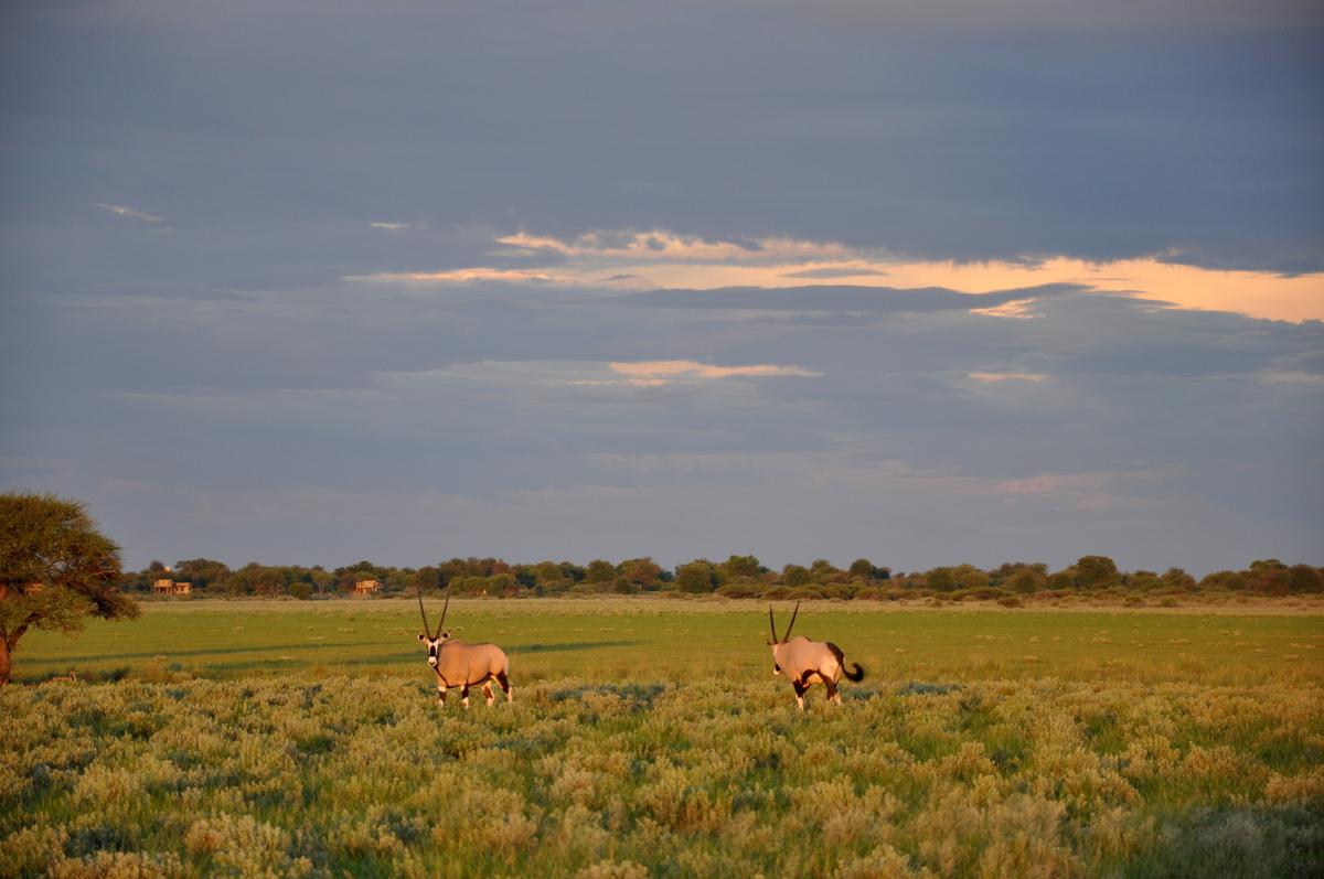 Botswana Safari und Victoriafälle: Unsere Afrika Rundreise sonne land und leute reisebericht botswana afrika  TUI Berlin Botswanasafari Abendstimmung 1
