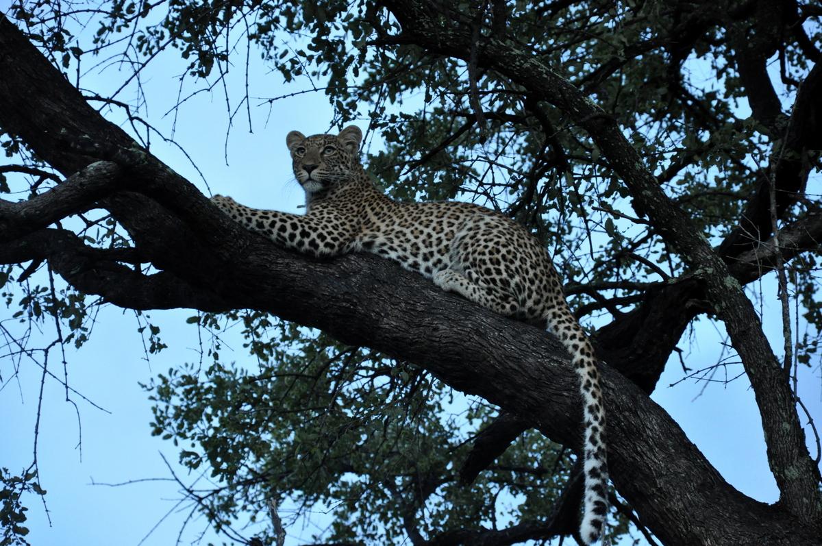 Botswana Safari und Victoriafälle: Unsere Afrika Rundreise sonne land und leute reisebericht botswana afrika  TUI Berlin Safari Okavangodelta Leopard