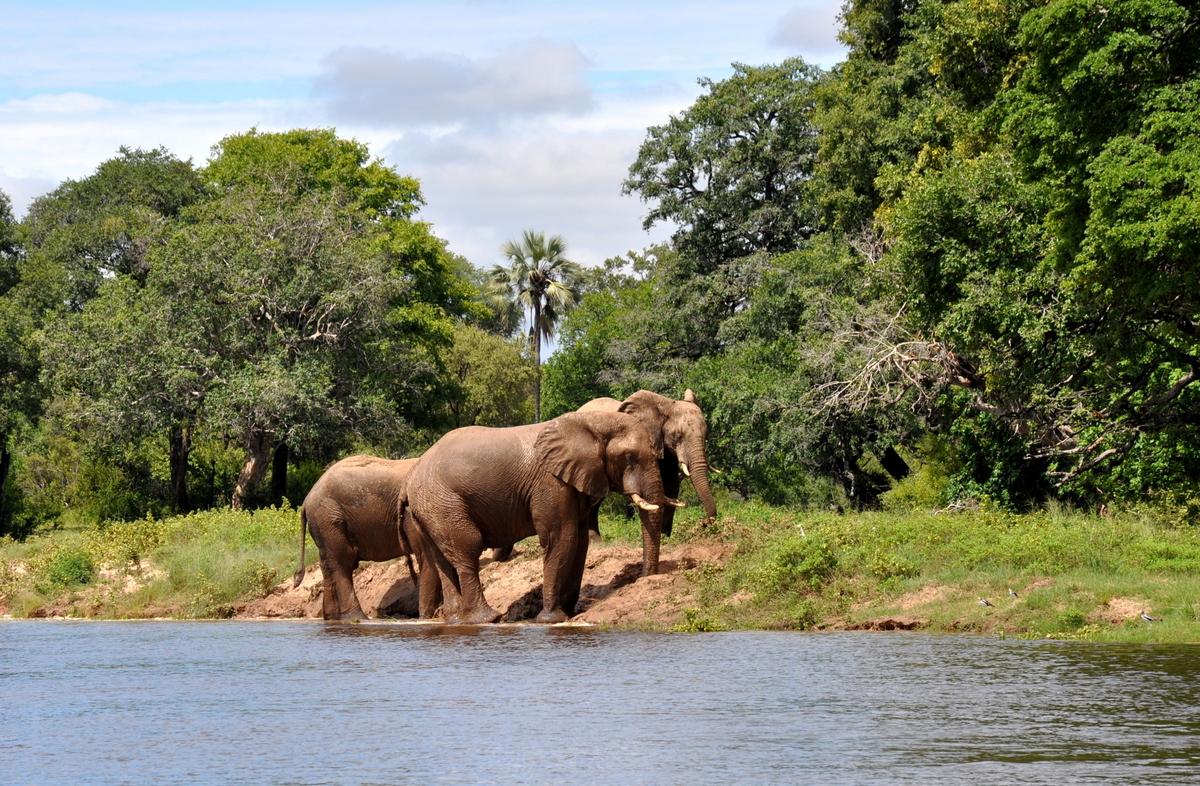 Botswana Safari und Victoriafälle: Unsere Afrika Rundreise sonne land und leute reisebericht botswana afrika  TUI Berlin Simbabwe Sambesi Elefantenbad