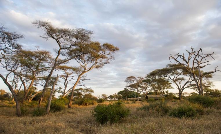TUI, Reisebüro, World of TUI, Berlin, Jörg Kästner, Safari, Nomad´s Serengeti Safari Camp, Afrika, Erlebnisreise, Erlebnisbericht, Expertentipp