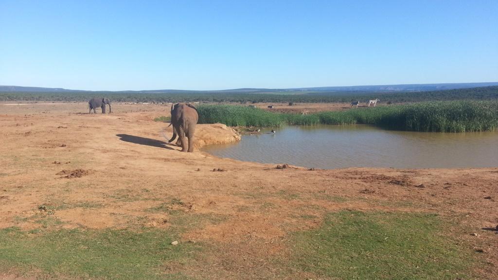 Südafrika entdecken – Teil 2: Von Port Elizabeth zum Addo Park uncategorized suedafrika sonne safari land und leute  tui berlin südafrika addo elephant park elefanten