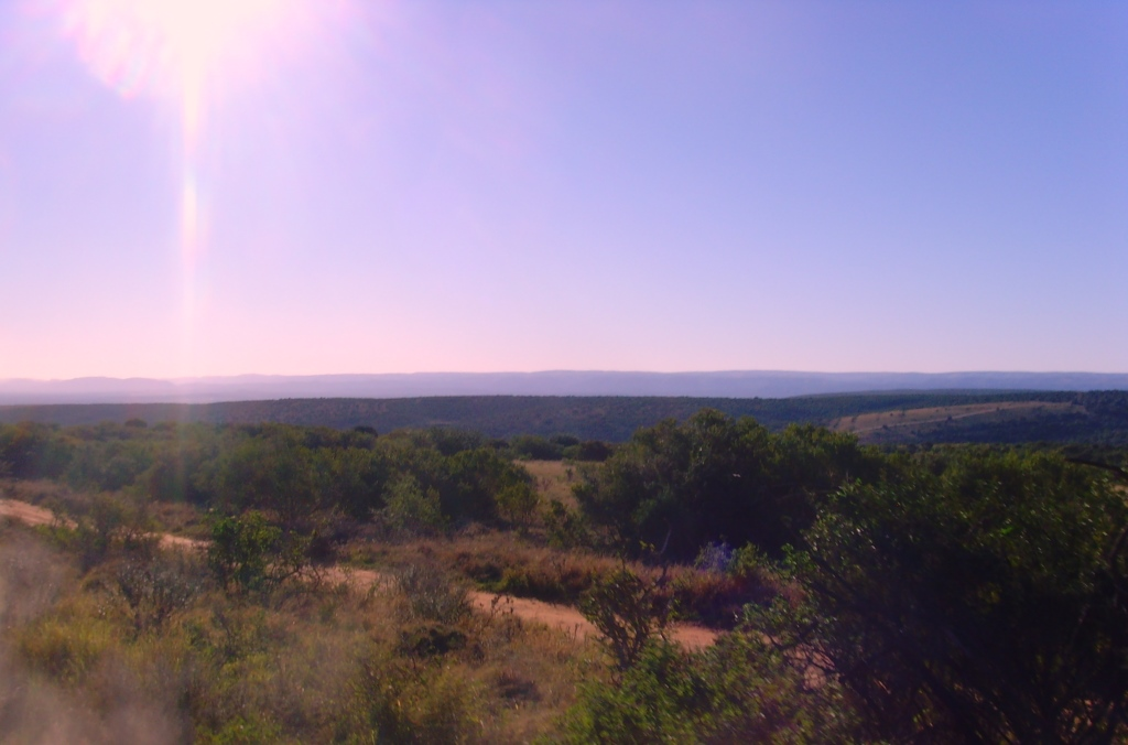 Südafrika entdecken – Teil 2: Von Port Elizabeth zum Addo Park uncategorized suedafrika sonne safari land und leute  tui berlin südafrika port elizabeth addo park panorama