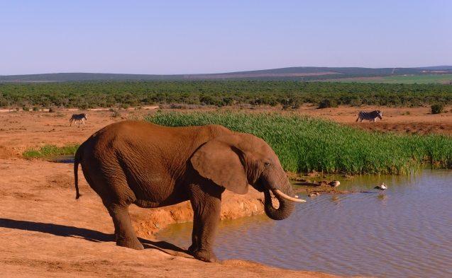 TUI, Reisebüro, World of TUI, Berlin, Südafrika, Port Elizabeth, Addo Elephant Park, Safari, Rundreise, Radisson Blue Hotel, Hobie Beach, Humewood, Kings Beach, Welles Beach, Jessica Zelck, Reisebericht, Reiseblog