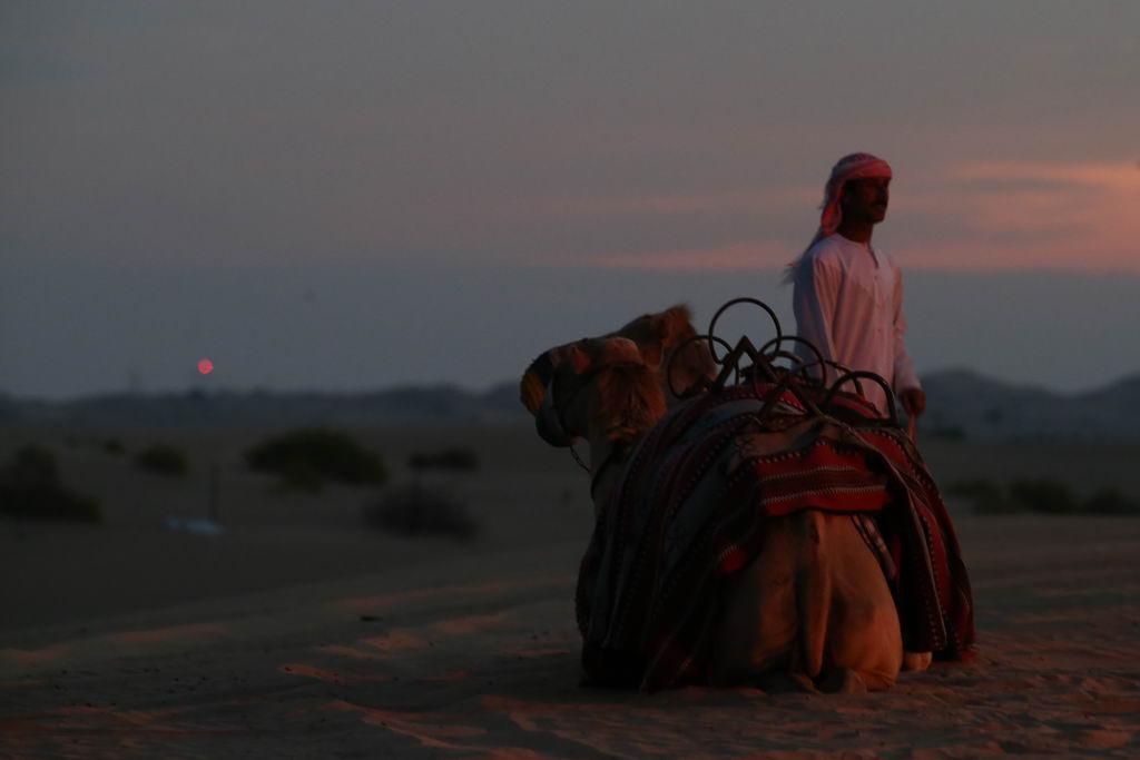Einzigartige Wüstenerlebnisse strand staedtereisen sonne land und leute reisebericht abu dhabi  tui berlin wüste abu dhabi wüstencamp kamel dämmerung